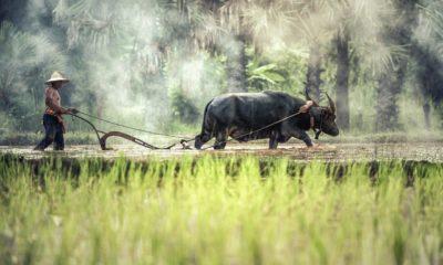 วิธีลงทะเบียนเกษตรกร 2563 ออนไลน์ ล่าสุด ผ่านแอป Farmbook | Tadoo