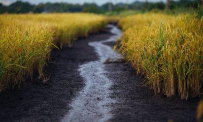 เงินเยียวยาเกษตรกร เดือนที่ 2 โอนแล้วเกือบ 3 ล้านราย ไม่ได้เดือนแรกทบไป 1 หมื่น | Tadoo