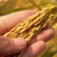 22 มิ.ย. เงินเยียวยาเกษตรกร โอนอีกกว่า 6 หมื่นคน | Tadoo
