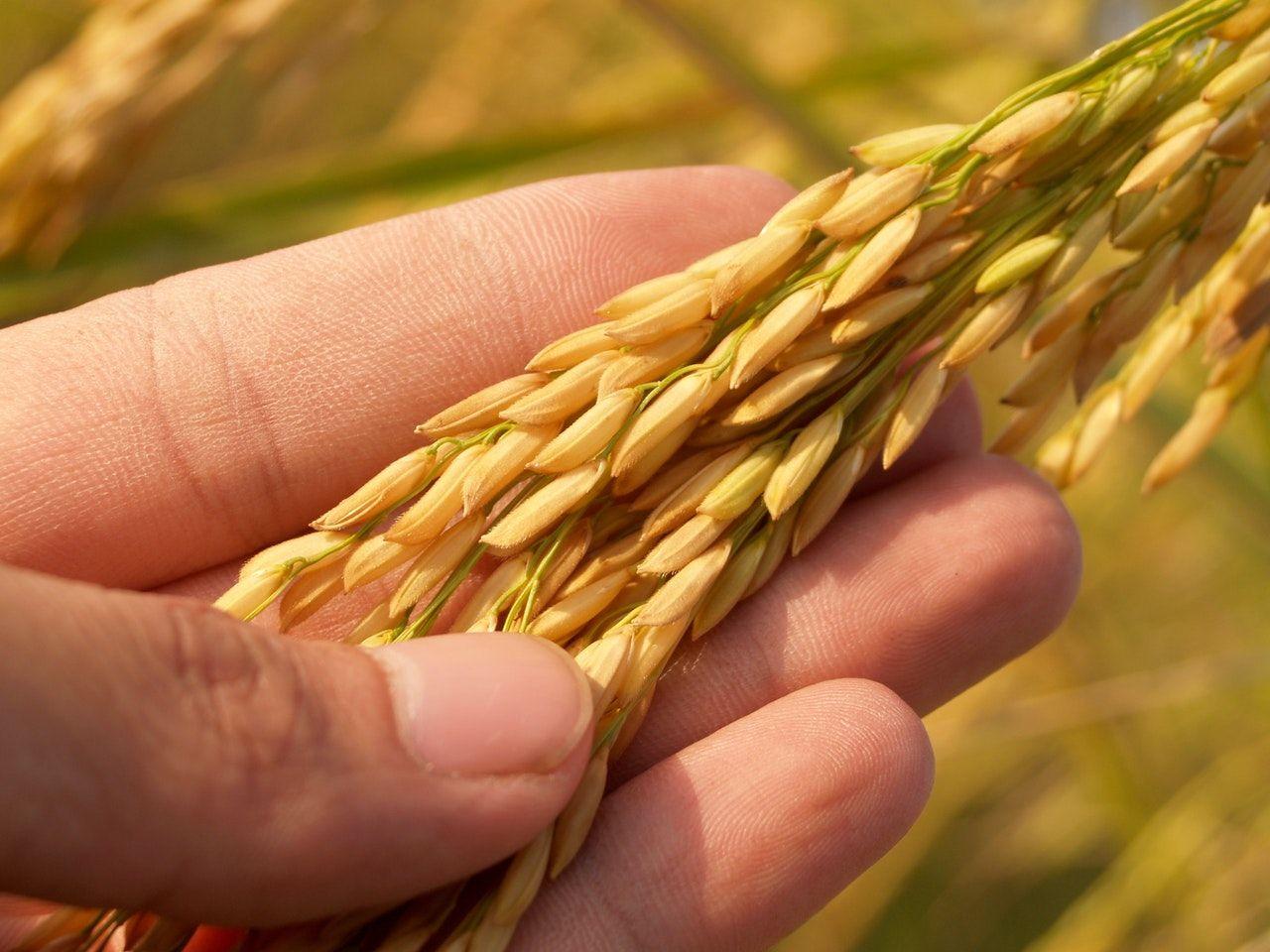 19 มิ.ย. เงินเยียวยาเกษตรกร โอนแล้วกว่า 3 ล้านราย บางคนทบ 10,000 | Tadoo