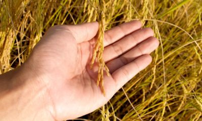 15 ก.ค. เยียวยาเกษตรกร.com จ่ายเงิน 5000 บาทงวดสุดท้ายวันแรก | Tadoo