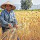 15 ก.ค. ตรวจสอบเยียวยาเกษตรกร.com จ่ายแล้ววันแรก | Tadoo